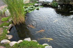 pond_waterfall_p21